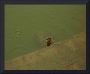 Lumbini Monsoon Turtle