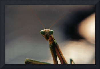 Posing Insect