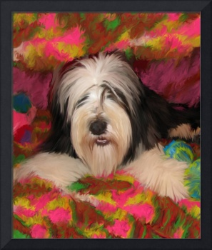 Bearded Collie posing
