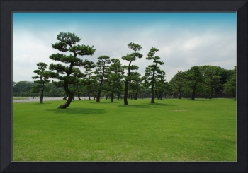 Imperial palace park in Tokyo