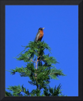 robin-pine-tree-topper-N0739