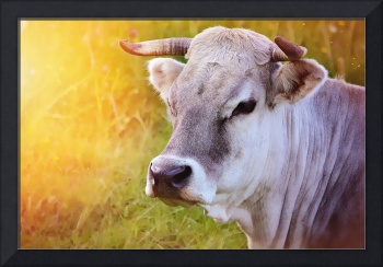 Cow's Face