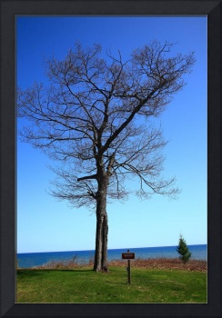 Tree and Great Lake 2010