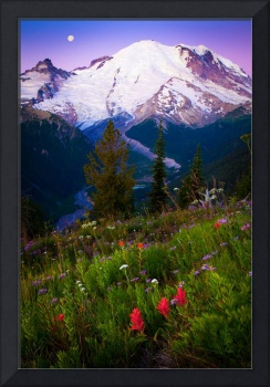 Purple Dawn at Mount Rainier