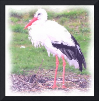 Stork with Black Feathers
