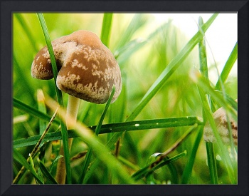 The Mushroom that Loved a Blade of Grass