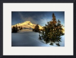 Timberline Valentine by Mark Cullen