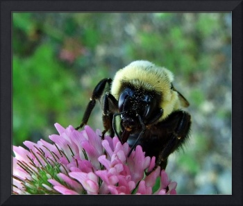 Bumble Bee (Head On)