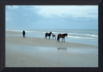 OBX Horses with Young