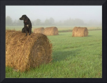 Dog on a Hay Bale 612