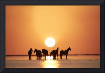 On The Rise   Horse photograph by Ejaz Khan