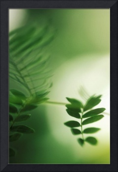 Unique View Of Blurred Green Plant, Light In Backg