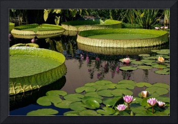 Enchanting Water Garden