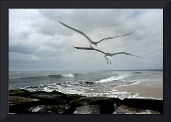 Double Seagulls