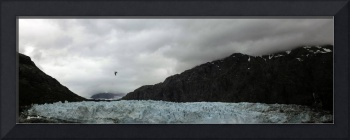 Bird Over Glaciers - Alaska