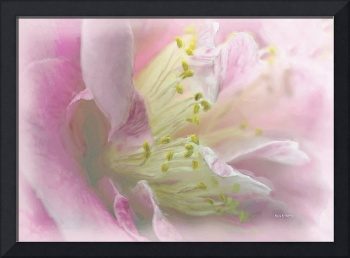 Camelia in pink - water color