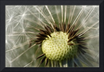 Painted Dandelion Clock