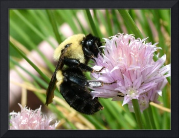 Chive Bumblebee