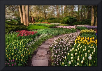 Pathway through Colorful Flowerbeds in Keukenhof