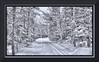 Rural Road in a Winter Evergreen Forest in Canada
