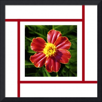 Red Marigold inside Geometric Lines