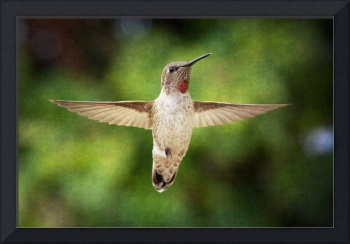Hummingbird over green