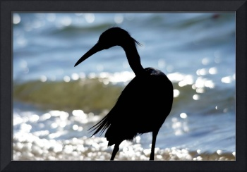 Blue Heron and Surf