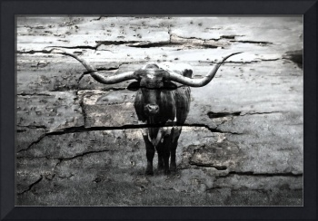 Mixed Media Texas Longhorn Black & White B74191616