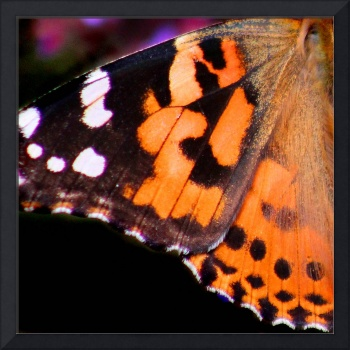 American Painted Lady Wing