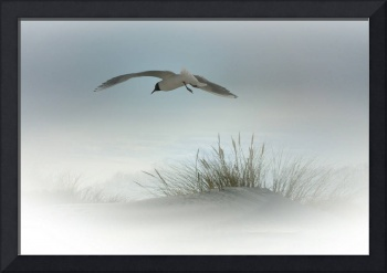 Seagull Over Sand Dune