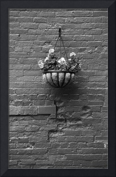 Rochester, New York - Wall and Flowers