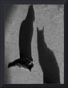 Un Chat, Deux Ombres (One Cat, Two Shadows)