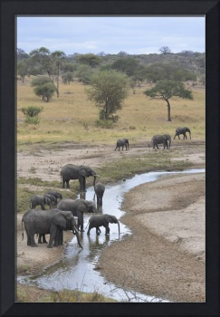Elephants Drinking in Tanzania