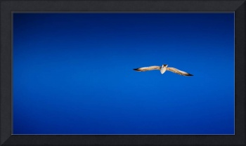 Seagull against the blue sky