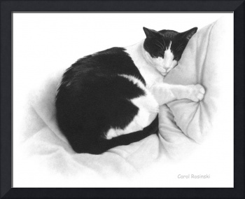 Black and White Tuxeo Cat Asleep on a Blanket