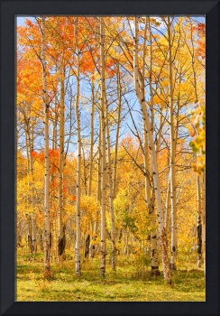 Aspen Fall Foliage Vertical Image