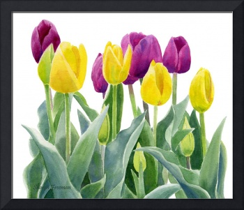 Yellow and Red Violet Tulips horizontal design
