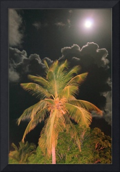 Full Moon over a Tropical Palm Tree