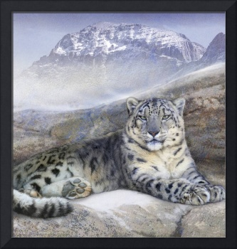 out of the wind-- snow leopard