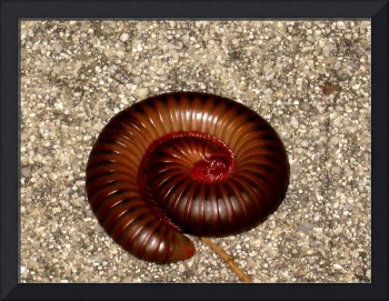 Napping Millipede