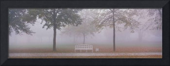 Trees and Bench in Fog Schleissheim Germany