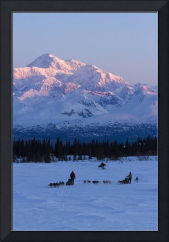 Recreational dog mushing in Denali State Park with
