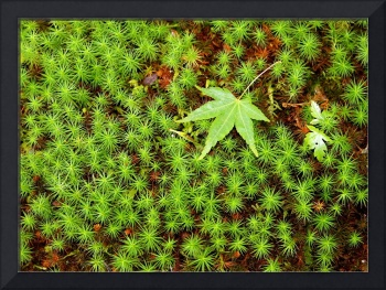 Maple on Moss