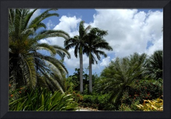 Cayman Islands : Botanic Park