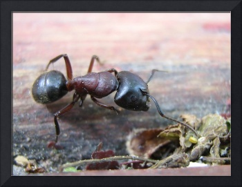 Ant on the patio