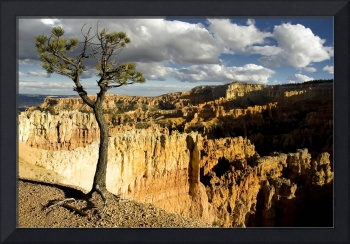 Lone Tree in Bryce Canyon