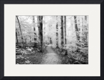 Sacred Grove (Infrared B&W) by D. Brent Walton