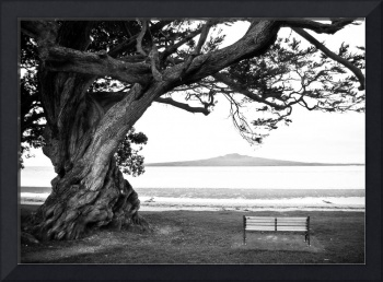Old Lone Tree on the ocean beach