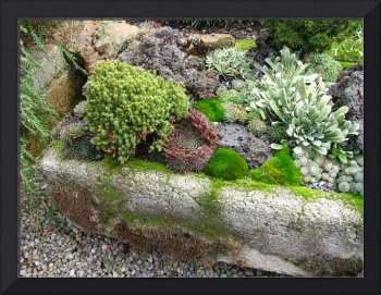 Mossy Trough Garden
