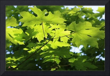 Green Leaves Canvas
